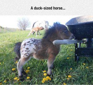 tiny-donkey